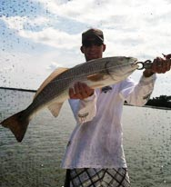 Redfish are Coming – Red Tide is NOT